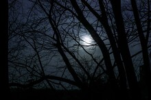 Moon Seen Through The Bare Branches Of The Tree