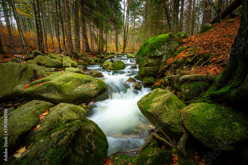 Fotografia wonder forest  with creek on rocks with moss during fall