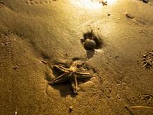 Estrella De Mar Y Concha En La...