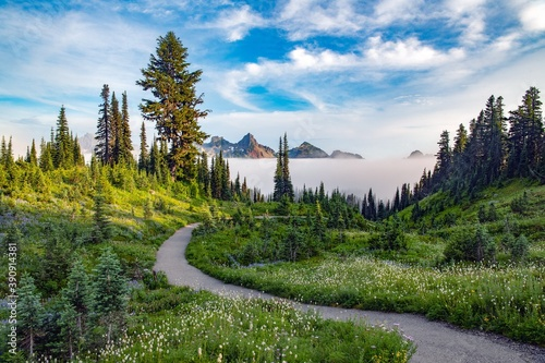 Fototapeta A trail at Mount Rainier national park leading through a forest with a layer of