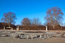 Flock Of Seagulls At The Winter Park . City Garden In December