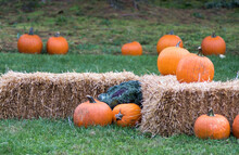 Bales Of Straw With Pumpkins I...