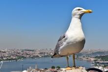 Seagull On The Galata Tower Ba...
