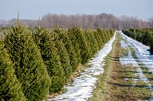 Beautiful  Christmas Tree Farm In Michigan USA
