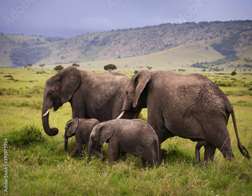 Selective focus shot of elephant mothers with babies in Masai Mara National Reserve in Kenya