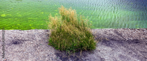 Fotomural Tussock of grass by the river in the summer