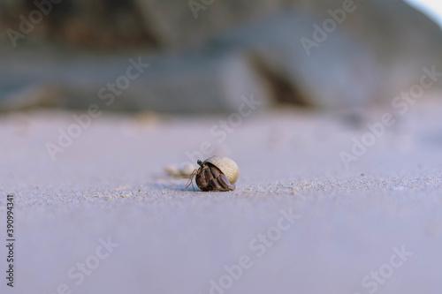 Fotografiet Closeup shot of a hermit crab on the beach
