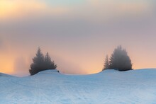 Mist Covered Trees In The Moun...