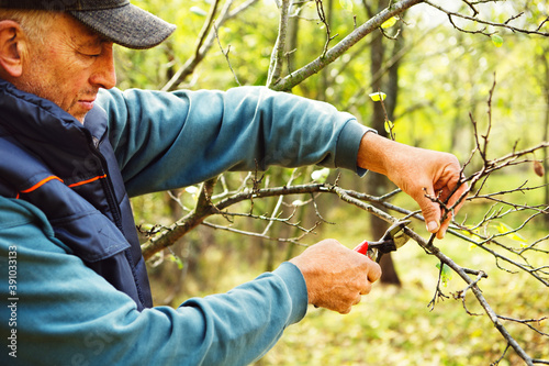 Agriculture man pruning tree branch with secateurs Fotobehang