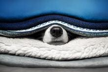 Cute Pets Photo Bright Blue Ba...