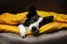 Cute Pets Photo Bright Yellow ...