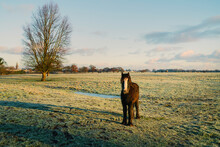 A Cob Horse  In Green Pasture Under Bright Sky In Fall. Beverley, Yorkshire, UK.