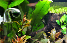 Drop Checker With Aquarium Plants, To Control The Amount Of Co2 Or Carbon Dioxide For Plant Growth.