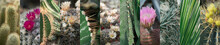 Various Cactuses Collage, Diff...