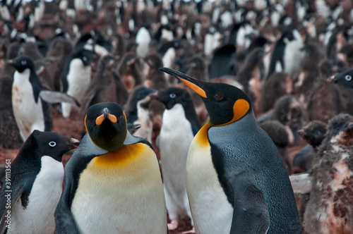 Cuadros en Lienzo pingwiny
