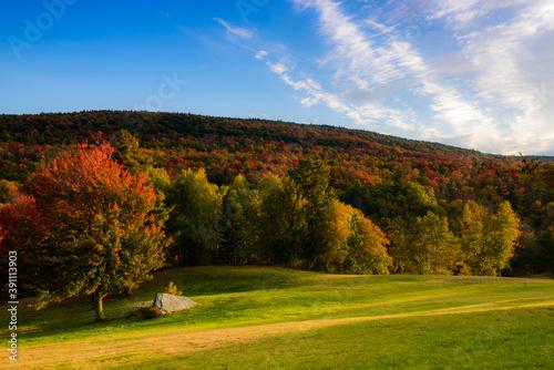 Obraz na plátně Kaaterskill forest by a fall afternoon