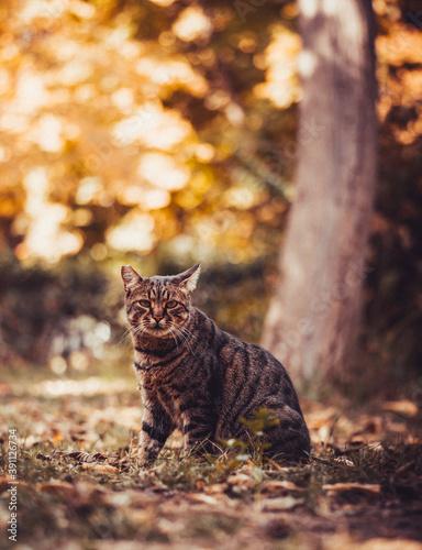 Fényképezés Retrato de gato gris en un bosque.