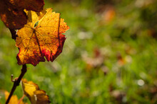 Yellow Red Coloured Autumn Gra...