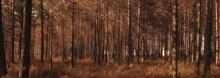 Landscape Summer Forest Glare ...