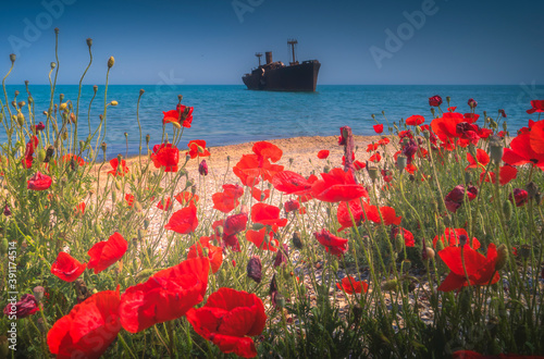 Fototapeta poppy flowers on the sea