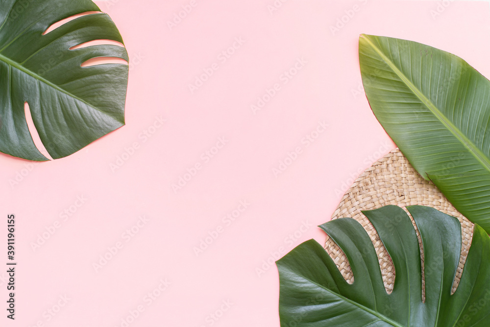 Fototapeta Tropical background with palm monstera leaves on pink.