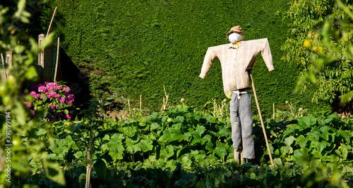 Fotografie, Obraz Jardin potager et son épouvantail au printemps.