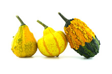 Colorful Pumpkins And Squashes...