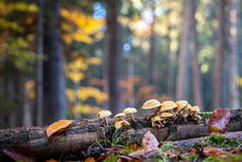 Still Life With Mushrooms In Colorful Autumnal Forest