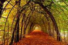 Bindaż,aleja, Graby,jesień,d...