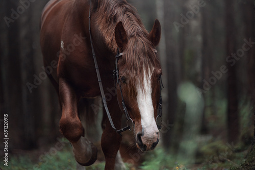 Fotografia, Obraz Horse heavy truck in the forest