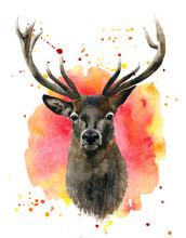 Watercolor Red Deer In Color Splashes.