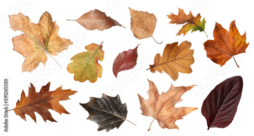 Set of different autumn leaves on white background Billede på lærred