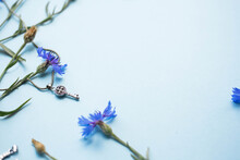 Blue Cornflowers On Blue Background