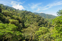Tropical Rain Forest In Panama