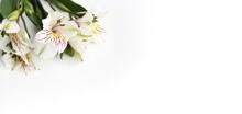 White Flowers On A White Backg...