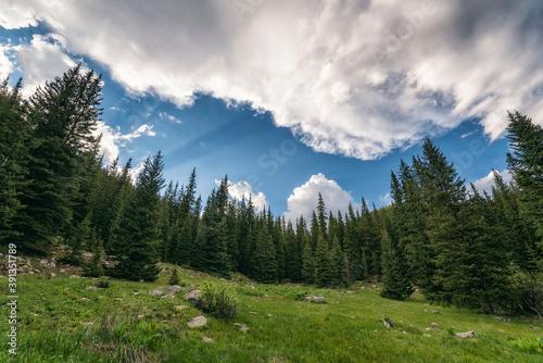 Forest Landscape in the Mount Evans Wilderness