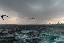 Escape From The Storm. Seagulls Flying In The Dark Sky