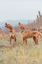 Rescued Hunting Dogs