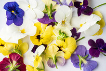 Viola Flowers On The White Bac...
