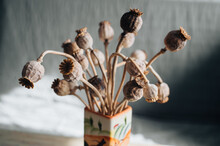 Dry Poppy Heads Also Known As Opium Straw