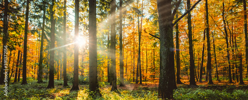 Silent Forest in autumn fall with beautiful bright sun rays