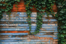 Old Wooden Barn Wall With Blue-red Colourful Boards Covered By Vine