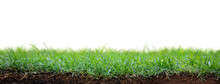 Green Grass Patch With Dirt And Roots Exposed