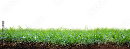 Cuadros en Lienzo Green Grass Patch With Dirt and Roots Exposed