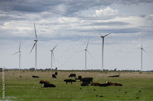 Wind turbines in a field where cows are grazing captured on a cloudy day Canvas Print
