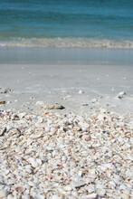 Shells Washed Shore At Sanibel Island Beach, Florida With Ocean