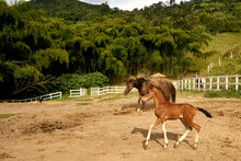 Beautiful Mare With Its Foal S...
