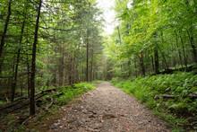 Narrow Unpaved Trail In The De...
