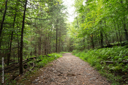 Cuadros en Lienzo Narrow unpaved trail in the dense woodland covered with lush vegetation in the m