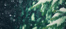 Beautiful Christmas Background With Fresh Fir Tree And Falling Snow. Winter Holiday Texture Of Green Spruce Branches Covered With Snow On Dark Festive Background Template. Christmas Holiday Horizontal